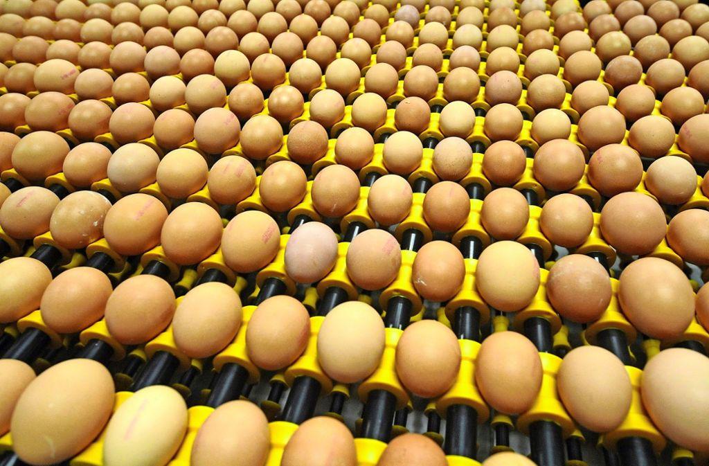 mit salmonellen belastete eier das genaue ausma ist noch unklar rems murr kreis. Black Bedroom Furniture Sets. Home Design Ideas