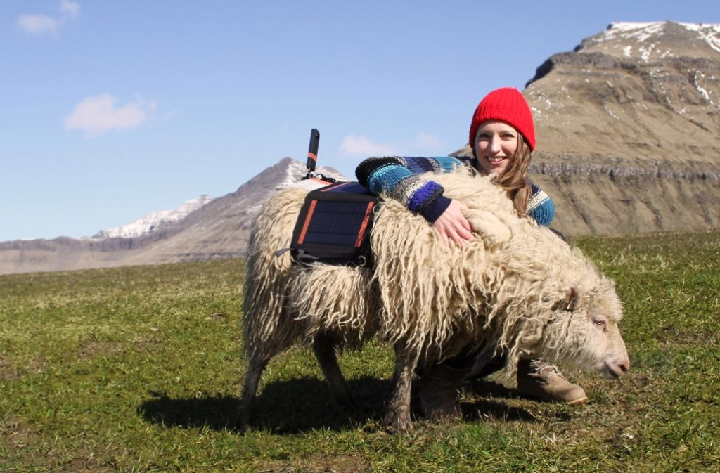 """Durita Dahl Andreassen will die Färöer weltweit bekannt machen – durch """"Sheep View"""". Foto: visitfaroeislands.com"""