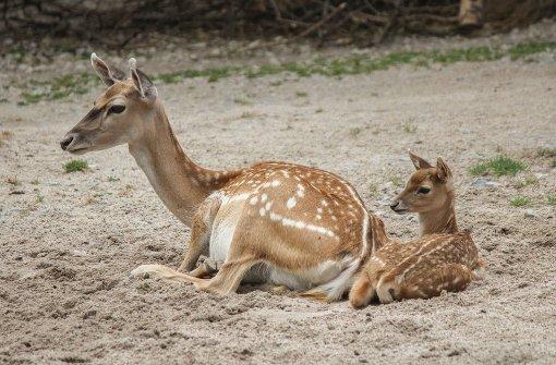 Die Bambis verzücken die Besucher