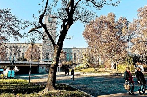 Für die Arbeiten im Schlossgarten müssen Bäume weichen. Foto: Honzera