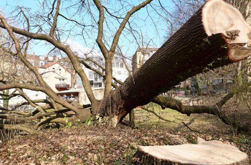 Anwohner sind über Baumfällung erbost