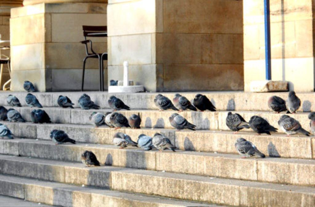 Tauben sitzen auf den Stufen vor dem Stuttgarter Königsbau. In der Landeshauptstadt ist es verboten, die Vögel zu füttern. Foto: Leserfotograf remstal-knipser