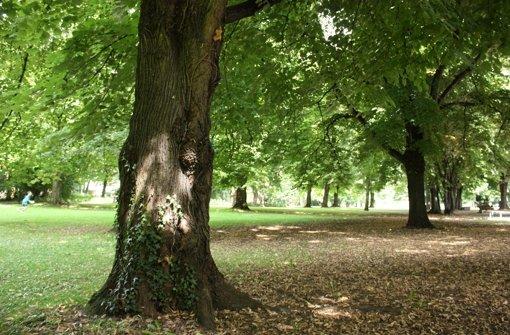Sieben Bäume werden gefällt