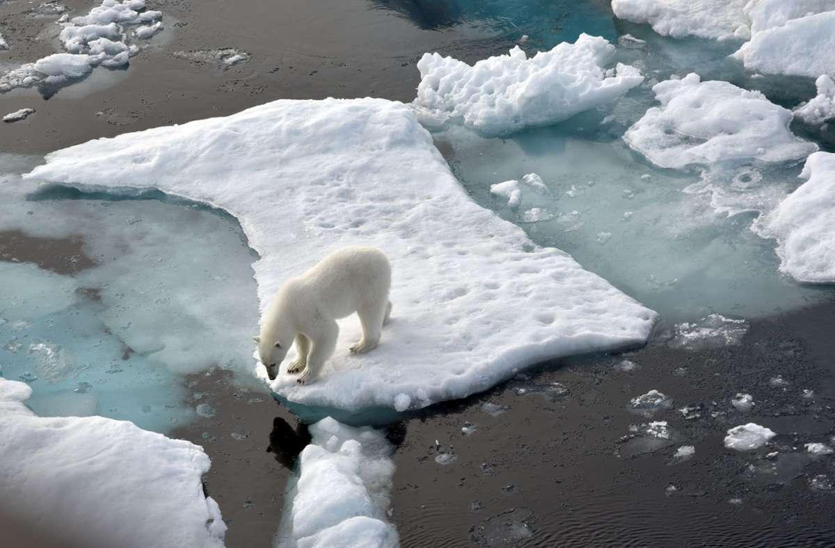 Ein Eisbär steht im Nordpolarmeer auf eine Eisscholle. Das Meereis in der Arktis ist auf die zweitniedrigste Ausdehnung seit Beginn der Messungen vor rund 40 Jahren geschrumpft. Foto: Ulf Mauder/dpa