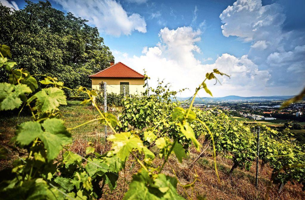 Das Gartenschauprogramm auf dem Grafenberg wird anders als bislang geplant. Foto: Gottfried Stoppel