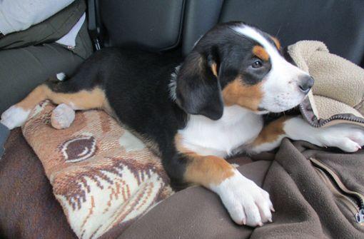 Hundewelpen nicht angemeldet - Ehepaar muss Strafe zahlen