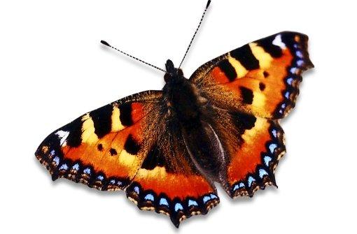 Das Schillern der Schmetterlinge