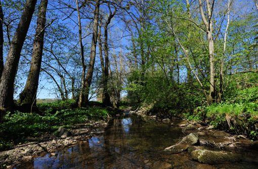 Dreckbrühe in der Körsch erbost Naturfreunde