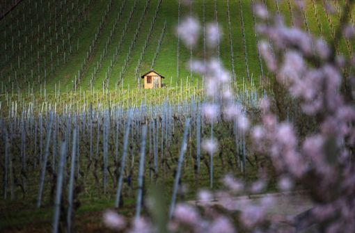 So schön ist das Frühjahr im Rems-Murr-Kreis
