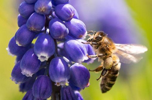 Volksbegehren zur Rettung der Bienen