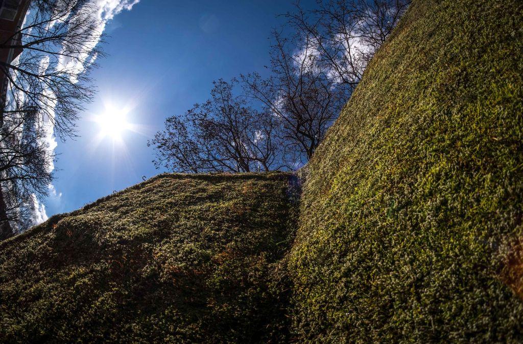 Mit Moss versucht die Stadt den hohen Feinstaubwerten Herr zu werden. Tatsächlich hat Stuttgart den EU-Grenzwert für Feinstaub für das Jahr 2017 schon erreicht. Foto: Lichtgut/Max Kovalenko