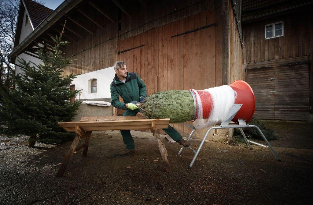 In den Wochen vor Weihnachten haben die Christbaumverkäufer viel zu tun. Foto: Gottfried Stoppel