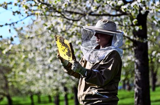 Langfinger greifen immer wieder  in Bienenkästen