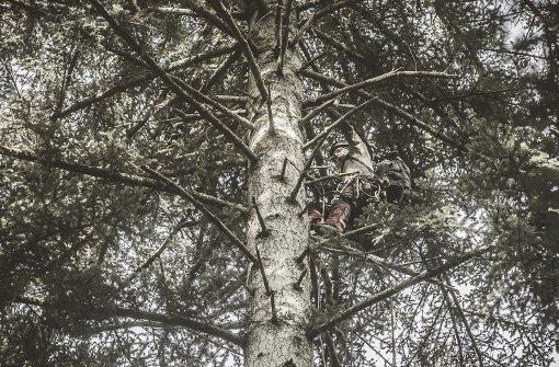 Nachwuchs für den Wald