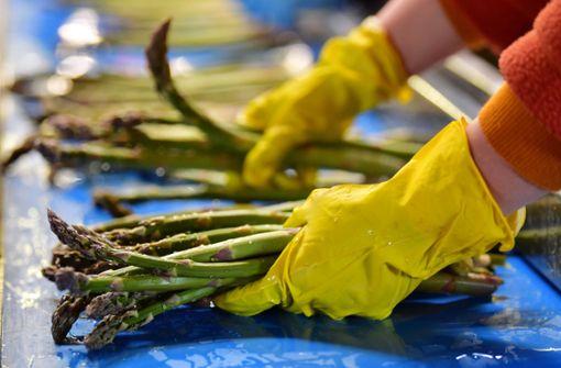 Erdbeer- und Spargelanbauer wollen längere Arbeitszeit  von Saisonkräften