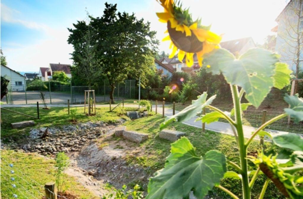 Vor einiger Zeit hat die Stadt einen Zaun rund um den frisch renaturierten Uhlbach errichtet, der die jungen Uferpflanzen schützen soll. Foto: Martin Stollberg