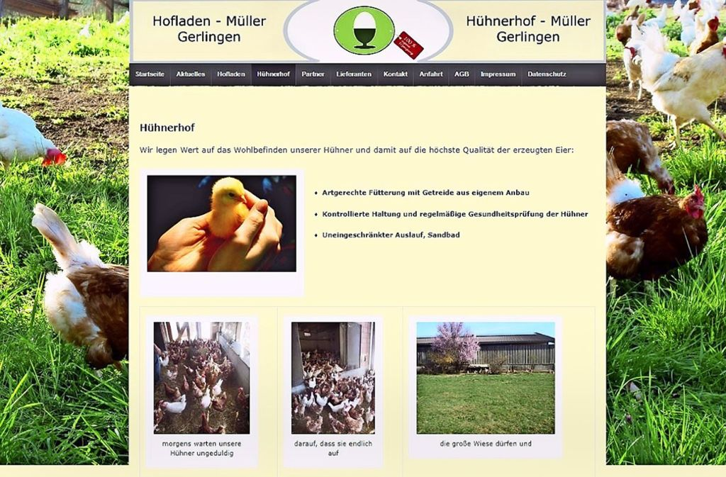 Gepflegte Hühner, umsorgte Küken: idyllische Hühnerwelt in Gerlingen Foto: StZ