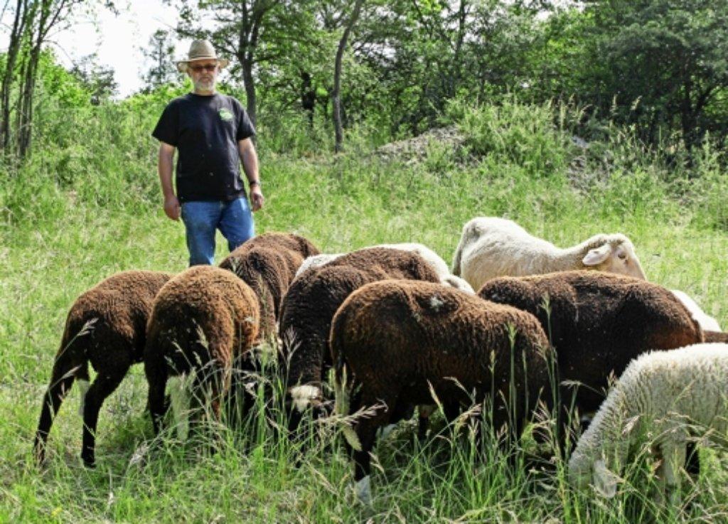 Jürgen Herrmann (62) mit seinen Schafen auf dem Flachter Ettlesberg. Seit 40 Jahren hütet er die Tiere schon – und sorgt mit den anderen Schäfern der Weidegemeinschaft dafür, dass die Heckengäu-Wiesen erhalten bleiben. Foto: factum/Bach