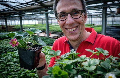 Züchter aus Stuttgart suchen den vollen Erdbeergeschmack