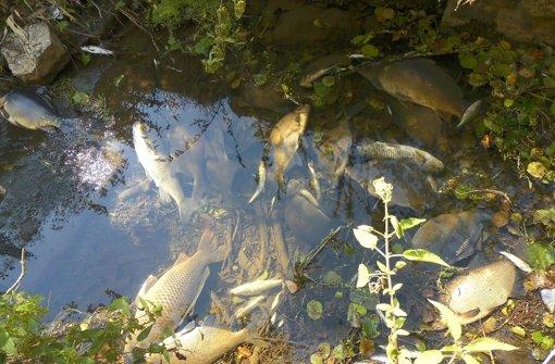 Giftiges Löschwasser sorgt für großes Fischsterben