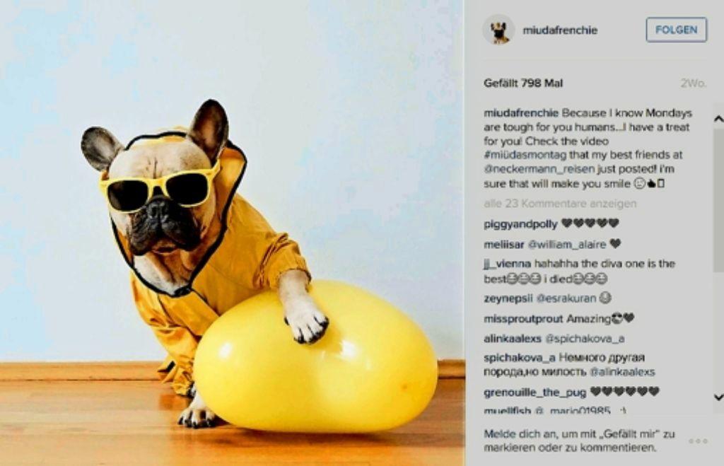 Eine Bulldogge als  knautschiges Gesicht für die Werbekampagne eines Reiseveranstalters? Im Netz ist alles möglich. Foto: StZ