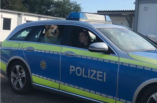 Polizisten nehmen entlaufenen Hund spontan auf Einsatz mit