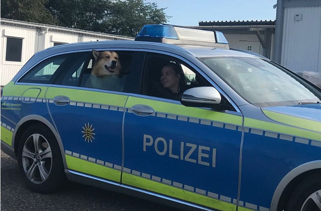 Der entlaufene Hund auf Einsatzfahrt – zur Freude der Beamten. Foto: Polizei Mannheim