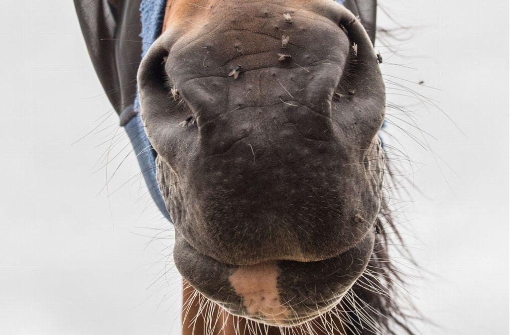 Ein Pferd verlor bei einem Unfall das Leben (Symbolfoto). Foto: dpa