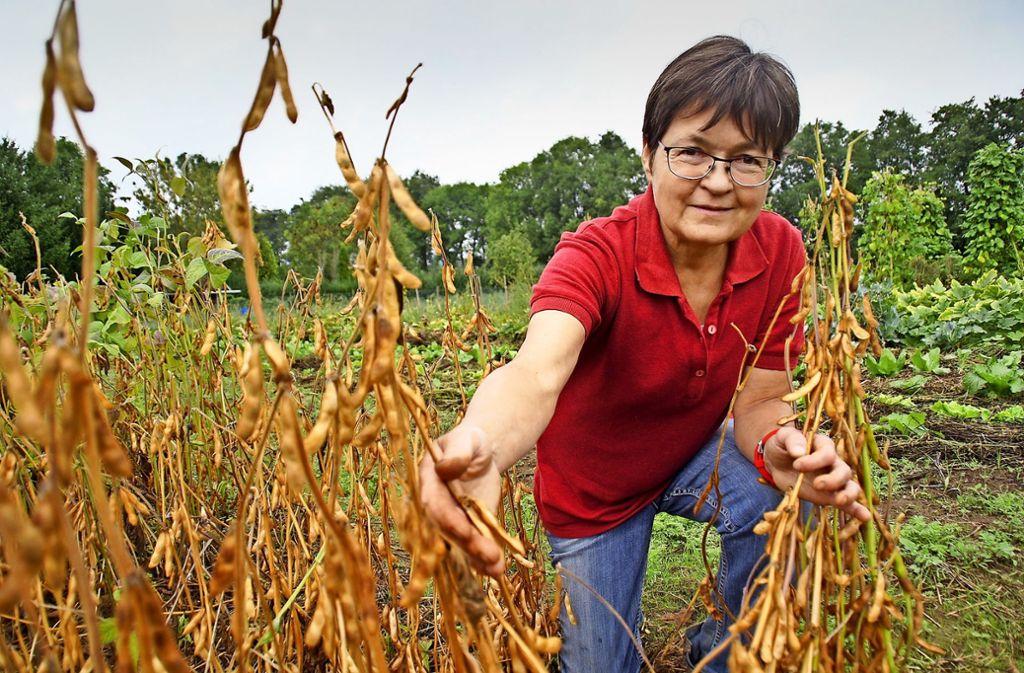 Mindestens eine Soja-Sorte gedeiht in Mechthild Hubls Garten in Möhringen sehr gut. Sie ist erntereif. Foto: Leonie Schüler