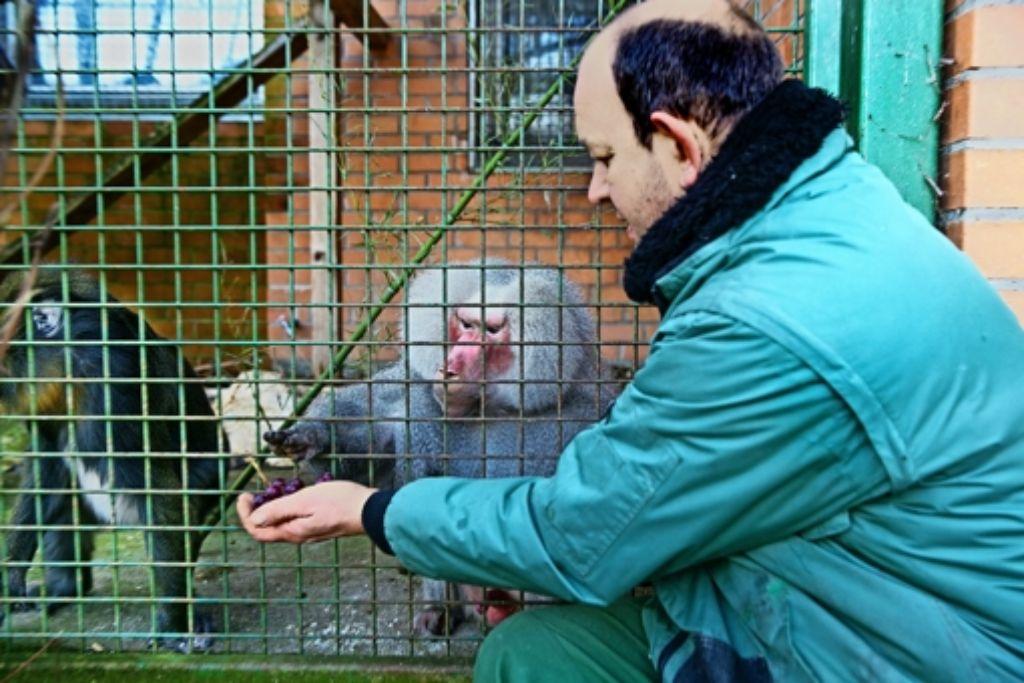 """Der Zoodirektor Heiko Eger kann sich weiterhin  um seine """"Viechle"""" kümmern. Foto: Rudel"""