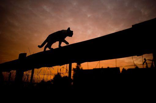 Katze liefert sich heftigen Kampf mit Marder