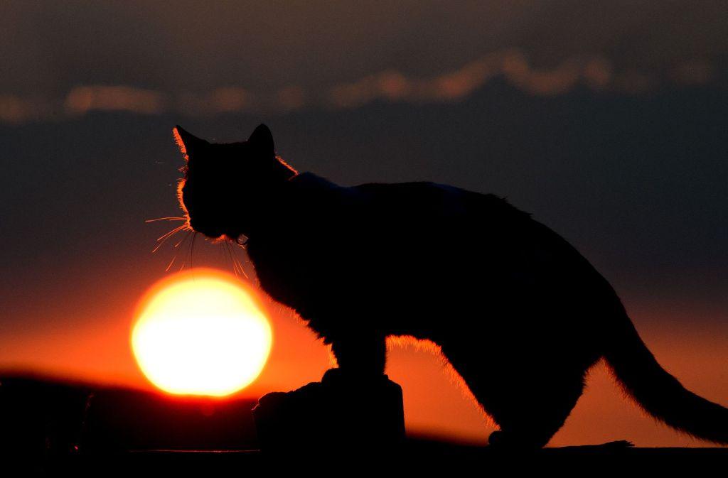 Am frühen Dienstagmorgen ist eine Katze vor einem Rollerfahrer über die Straße gerannt. Foto: dpa
