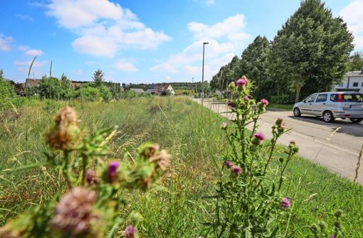 Stadt sichert sich   das Vorkaufsrecht   für die Krautgärten