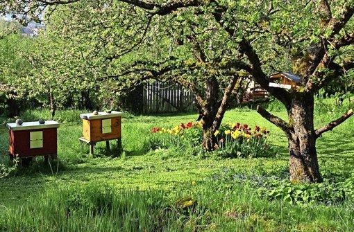 Ohne Bienen  existiert kein Leben