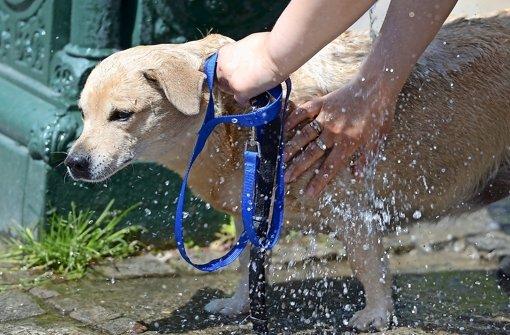 Auch Hunde sollten gelegentlich gewaschen werden. Foto: dpa