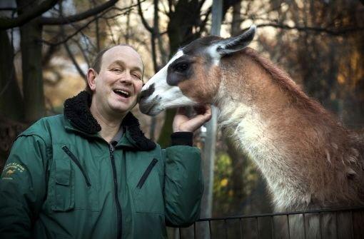 Ein Mann für alle Aufgaben: der Vorsitzende des Tierparkvereins, Zoodirektor und Cheftierpfleger Heiko Eger schmust mit einem Lama. Foto: Rudel