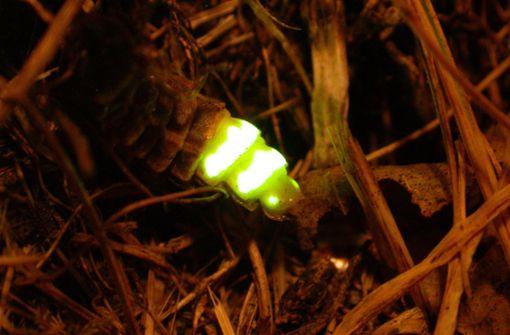 Mann beobachtet Glühwürmchen – und sorgt für Polizeieinsatz
