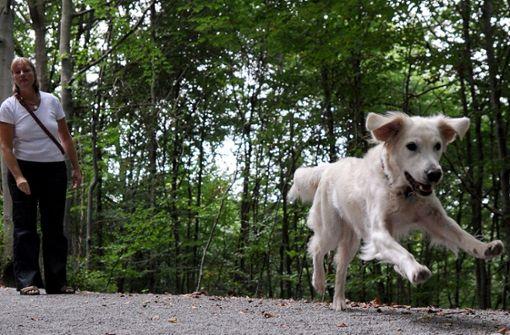 Immer mehr Zwischenfälle mit Hunden – über 1000 Anzeigen