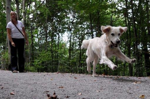 28.4.: Giftköder für Hunde ausgelegt