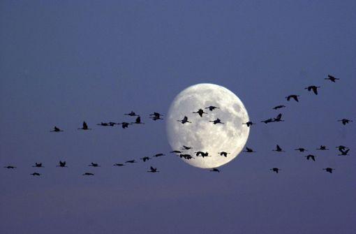 Was am Nachthimmel zu beobachten ist