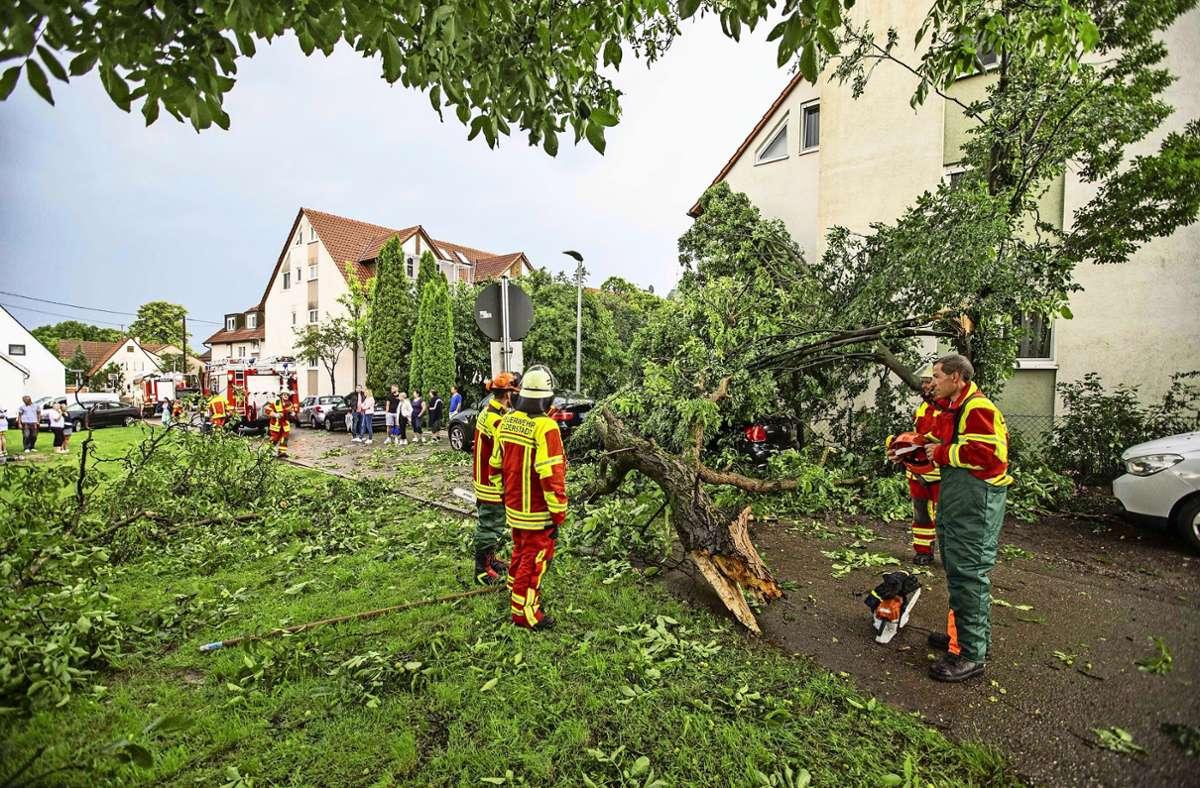 In diesem Jahr sind vor allem Bäume umgefallen, sagt der Kommandant von Filderstadt. Foto: 7aktuell.de/Simon Adomat