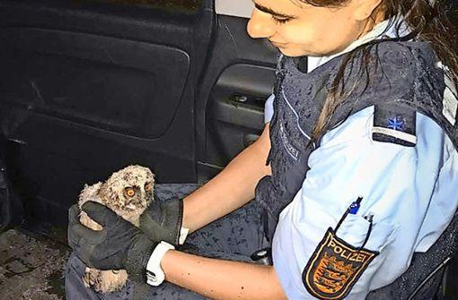 Polizei rettet kleine Eule vor Unwetter