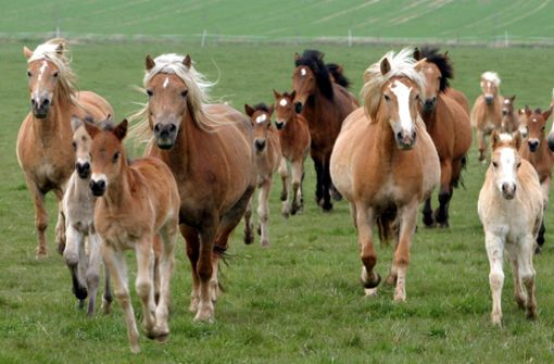 Pferde verletzen Frau schwer