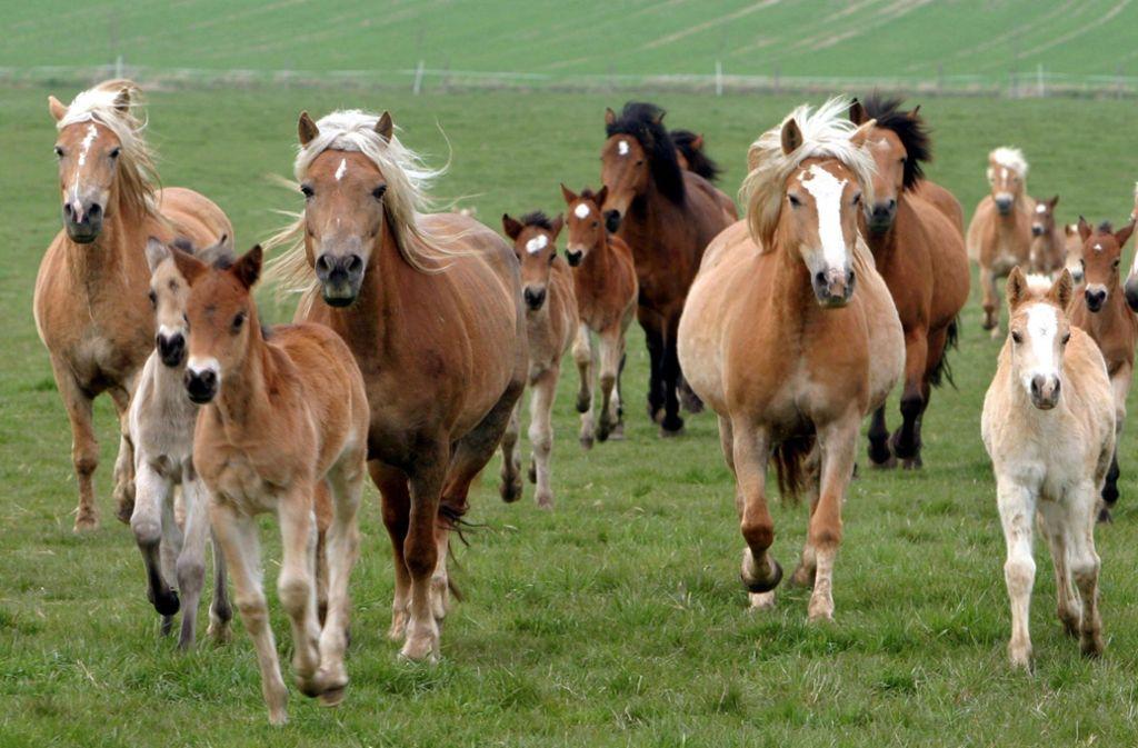 In Berglen sind am Dienstag zwei Pferde durchgegangen (Symbolbild). Foto: dpa