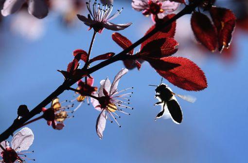 Insekten erwirtschaften jährlich eine Billion Dollar