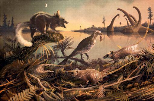 Zähne der wohl frühesten Vorfahren des Menschen entdeckt