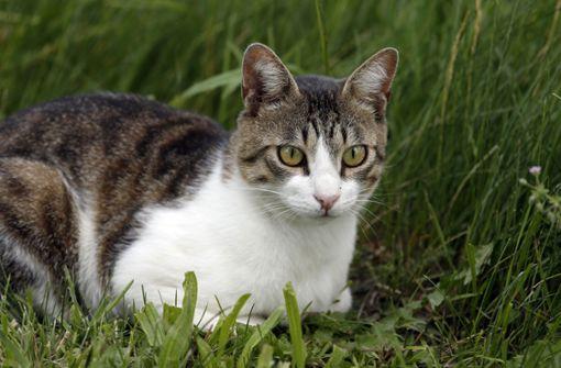 Umweltrechtler fordern Freigang-Verbot für Katzen