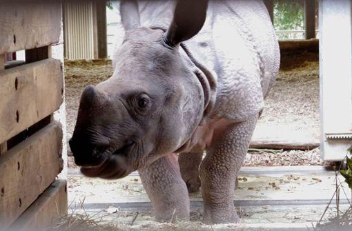 Zoos tauschen schnell noch Tiere aus