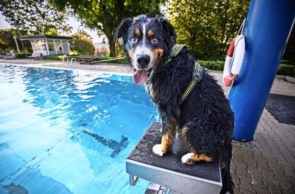 Kann es etwas schöneres geben, als in der Sonne im Pool zu planschen? Foto: /Michael Steinert