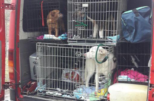 Polizei befreit vier Hunde aus Kleinbus